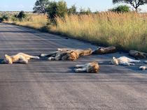Lei in Africa de Sud (twitter_