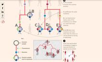 harta mutatiilor coronavirusului
