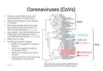 Coronavirusuri