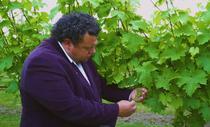 Viticultori italieni