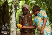 Cultivatori de cacao
