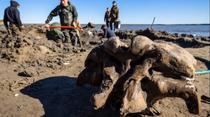 Schelet de mamut descoperit in Rusia