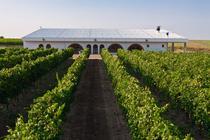 Vinul Adamclisi e produs in regiunea Dobrogei