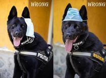 Cainele politist