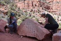 Amprente fosile (foto: Grand Canyon National Park via AP)
