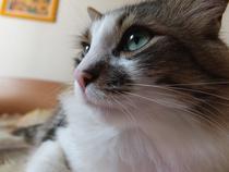 Ziua Internationala a Pisicii