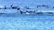 Balene blocate in nisip