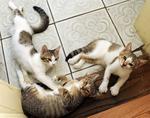 Numărul de pisici abandonate a crescut în pandemie cu 30% în Cipru