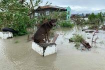 Dezastru provocat de taifunul Molave