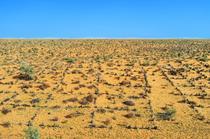 Teren arid
