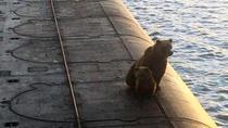 Ursoaica și puiul ei, pe puntea submarinului