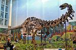 Schelet de Apatosaurus