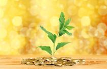 Investitii (Oleg Dudko, via Dreamstime.com)