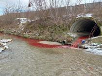 Sange si organe deversate in Bascov