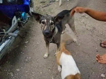 Cainele salvator (foto: Hope for strays)