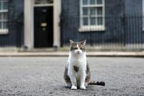 Larry, motanul din Downing Street