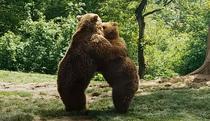 Rezervația de urși Libearty Sanctuary