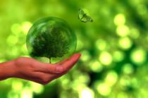 Energie electrică verde