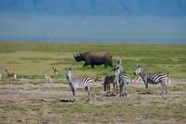 Craterul Ngorongoro/ Tanzania