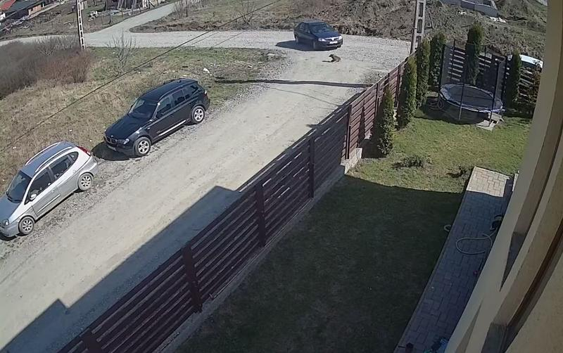 Un bărbat care a încercat să intre cu maşina în curtea sediului central al CIA a fost împuşcat