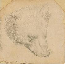 Capul unui urs, de Leonardo da Vinci