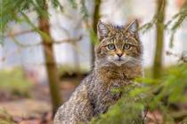 Speciile sălbatice din Europa trebuie mai bine protejate, spun eurodeputații