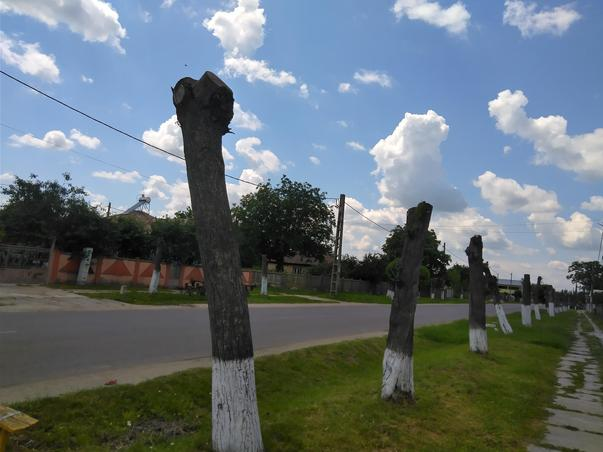 Toaletarea copacilor in comuna Scrioaștea, Teleorman