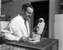 Harry Harlow a desfasurat experimente care ar fi de neimaginat in ziua de astazi