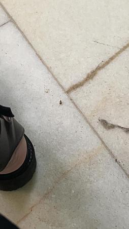 Gândaci maternitatea Giulesti