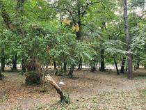 Parcul Cismigiu 15