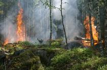Incendiu padure Bulgaria