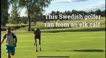 Golfer fugarit de un elan (facebook)