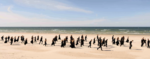 Filarmonica Marii Baltice