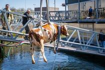 La Rotterdam a fost deschisa prima ferma plutitoare din lume