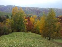 Culori de octombrie