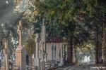 Cimitirul Cernica